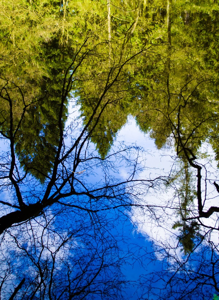 reflection_in_the_water